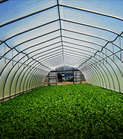 Greenhouses & Grow Tents